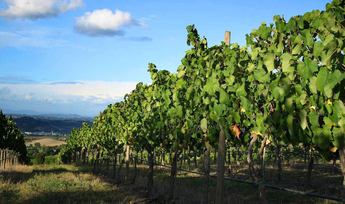 fico-wine-vineyard.jpg