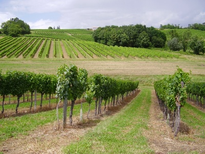 Margaux-Vineyards.jpg