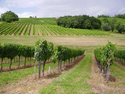 Margaux-Vineyards.jpg