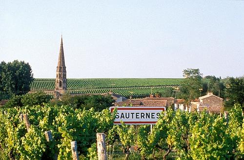 Sauternes1.jpg