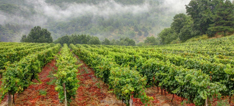 winery-bv.jpg